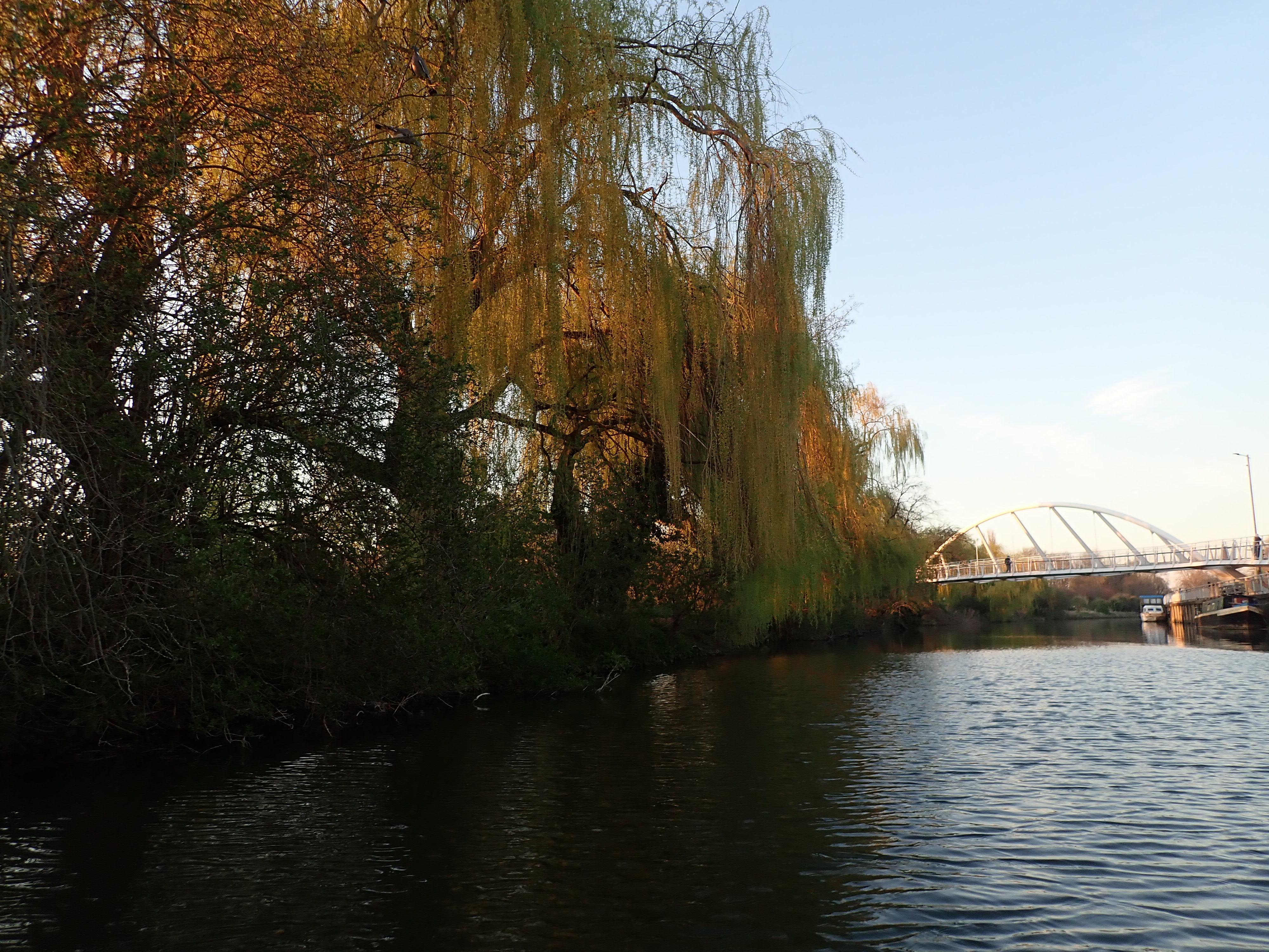 Logan's Meadow LNR